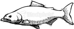 #FishyDishyCookery