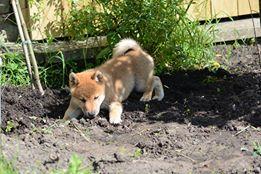 Digging?